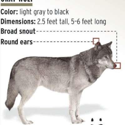 Greywolf88
